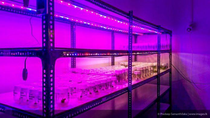 RED:BLUE 3:1 LED Tube lights