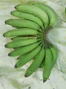 Dwarf Amban Banana Bunch